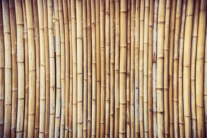bamboo wood grass
